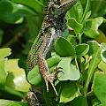 Lizard In Hedge by DejaVu Designs