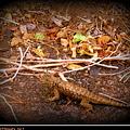 Lizard On The Loose by Bobbee Rickard