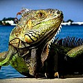 Lizard Sunbathing In Miami by Monique's Fine Art