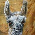 Llama Baby by Jurek Zamoyski