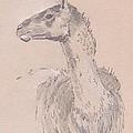 Llama Drawing by Mike Jory