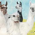 Llama Herd Camelid Farm Ranch Animal Art by Cathy Peek