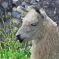 Llama by Jack Zulli