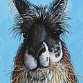 Llama Portrait by Penny Birch-Williams