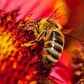 Loads Of Bee Pollen by Sabine Edrissi