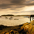 Lobster Boats Cape Porpoise Maine by Bob Orsillo