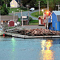 Lobster Fishing Days End by Steve Archbold