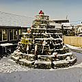 Lobster Pot Christmas Tree 3 by Dennis Coates
