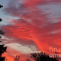 Lobster Sky by Barbara Griffin