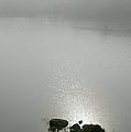 Loch Awe Misty Morning  by Gary Eason