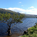 Loch Lomond Tree by John Topman