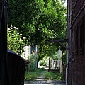 Locke Chinatown Series - Alley With Trees - 5 by Mary Deal