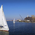 Locust Pt Sailing by Brian Wallace