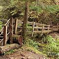 Log Bridge In The Rainforest by Carol Groenen