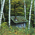 Log Cabin In The Birch Forest Vermont by Joe  Palermo