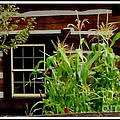 Log Cabin Window by Gail Matthews