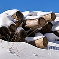 Log Pile In A Snow Drift In Winter by Louise Heusinkveld