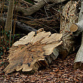 Logs by Tracey Beer
