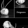 Onion Kitchen Art - L'oignon - Black And White by Nikolyn McDonald
