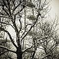 London Eye Through Snowy Trees by Lenny Carter