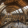 London Natural History Museum by Yhun Suarez