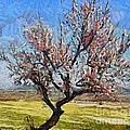Lone Almond Tree In Bloom by Dragica  Micki Fortuna