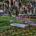 Lone Bench by Michael Thomas