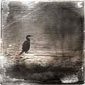 Lone Cormorant by Carol Leigh