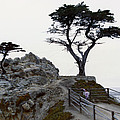 Lone Cypress 1970 by Floyd Snyder