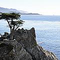 Lone Cypress by AJ  Schibig