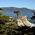Lone Cypress On 17-mile Drive  by Carol M Highsmith