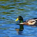 Lone Duck by Darren Burton