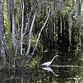Lone Egret by Bruce Bain