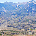 Lone Evergreen - Mount St. Helens 2012 by Connie Fox