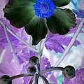 Lone Flower 1 by Chalet Roome-Rigdon