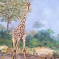 Lone Giraffe by Robert Teeling