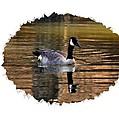 Lone Goose by Maria Urso