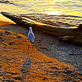 Lone Gull by Frozen in Time Fine Art Photography