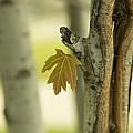 Lone Leaf by Zoltan Tougas