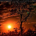 Lone Manzanita Sunset by Patrick Witz