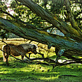 Lone Pony by Blake Richards