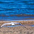 Lone Seagull by Darren Burton