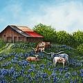 Lone Star Bluebonnets by Debra Sue  Waters