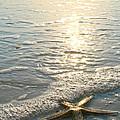 Lone Star On Lovers Key Beach by Olivia Novak