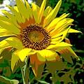 Lone Sunflower by Barbara McDevitt