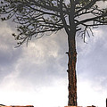 Lone Tree 11351 by Jerry Sodorff
