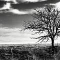 Lone Tree 2 by Eric Benjamin