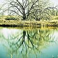Lone Tree 2 by Marilyn Hunt