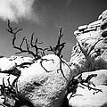 Lone Tree by Alex Snay