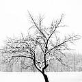 Lone Tree by Andrew Ramdat